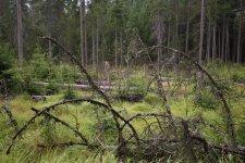 Jakub Spodymek fotografia przyrodnicza las Góry Stołowe Torfowisko Batorowskie