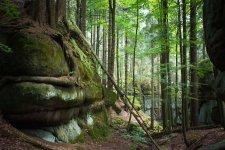 Jakub Spodymek fotografia przyrodnicza las Góry Stołowe