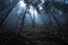 Jakub Spodymek fotografia przyrodnicza krajobraz rezerwat przyrody Romanka beskidy mgła las