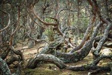 Jakub Spodymek fotografia przyrodnicza krajobraz rezerwat przyrody trollskogen las troli Olandia wyspa szwecja