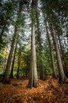 Jakub Spodymek fotografia przyrodnicza krajobraz rezerwat przyrody olandia wyspa szwecja cedry