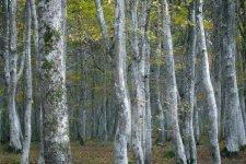 Jakub Spodymek fotografia przyrodnicza krajobraz rezerwat przyrody olandia wyspa szwecja
