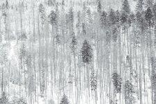 Jakub Spodymek fotografia przyrodnicza rezerwat przyrody Romanka beskidy zimą las