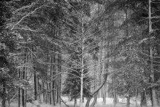 Jakub Spodymek fotografia przyrodnicza las zimą drzewa krajobraz Tychy