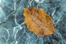 Jakub Spodymek fotografia przyrodnicza zima liść lód mróz