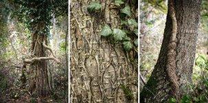 Jakub Spodymek fotografia przyrodnicza bluszcz drzewa las