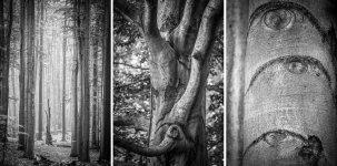 Jakub Spodymek fotografia przyrodnicza rezerwat przyrody las murckowski buki