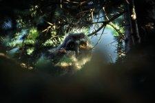 Jakub Spodymek fotografia przyrodnicza ptaki sowa uszatka