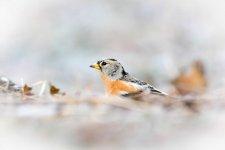 Jakub Spodymek fotografia przyrodnicza ptaki jer