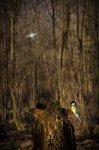 Jakub Spodymek fotografia przyrodnicza ptaki bogatka