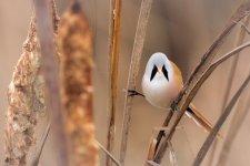 Jakub Spodymek fotografia przyrodnicza ptaki