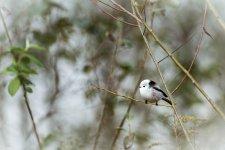 Jakub Spodymek fotografia przyrodnicza ptaki Raniuszek