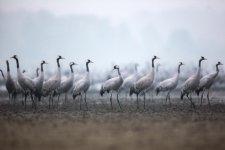 Jakub Spodymek fotografia przyrodnicza ptaki żurawie