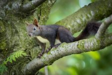 Jakub Spodymek fotografia przyrodnicza wiewiórka ssaki