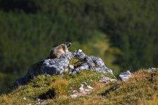 Jakub Spodymek fotografia przyrodnicza świstak